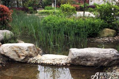 柏庄香域柏庄香域整齐的水草