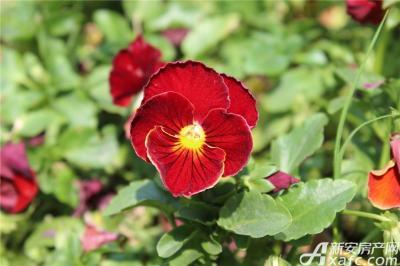 雨润星雨华府府盛开的花儿(2015.4.28)