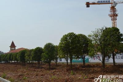 公园里绿化带 项目进度 2015-05