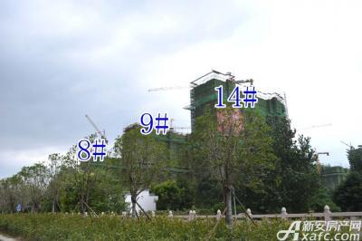 万成·哈佛玫瑰园万成哈佛国际8月项目进度  14#楼建至地上10层