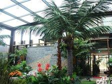 恒大绿洲恒大绿洲售楼中心—仿真园林的椰树
