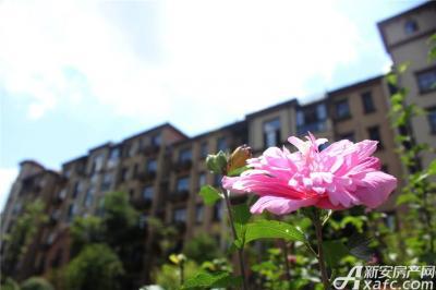 高速铜都天地天气很好盛开的花儿