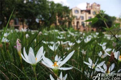 高速铜都天地绿草地的小花