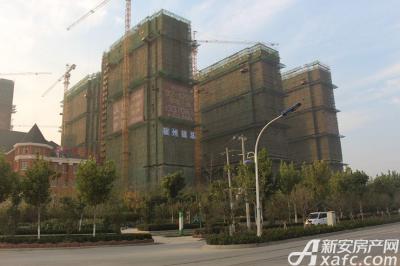 万成·哈佛玫瑰园万成哈佛国际11月工程进度