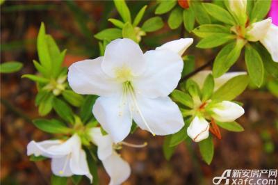高速铜都天地高速铜都天地的花儿开的正艳