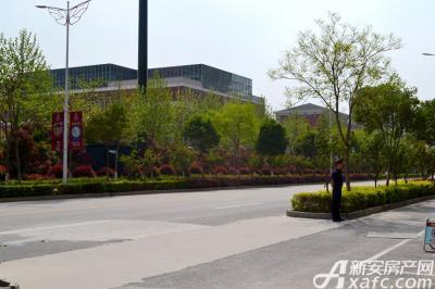 万成·哈佛玫瑰园2016年4月实景图