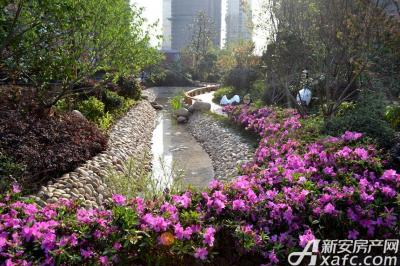 万成·哈佛玫瑰园景观园区实景图