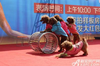 万成·哈佛玫瑰园海狮秀暨样板间开放(2016.9.10)