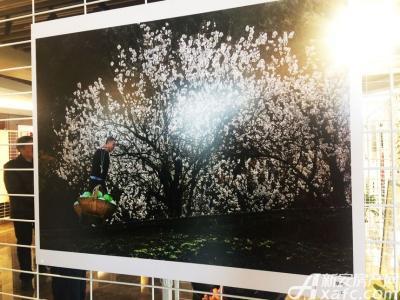 新安印象全市干部职工摄影书画展参展作品(20170224)