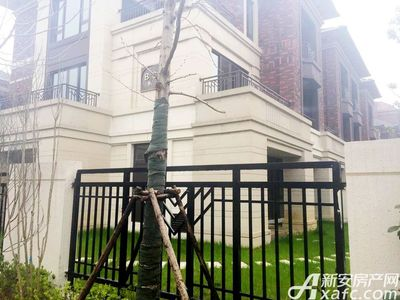 保利西山林语别墅实景图(2017.3.20)