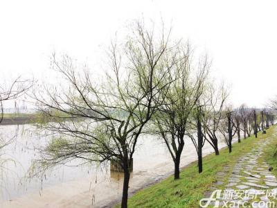 恒大滨江左岸恒大地块周边河景