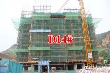 淮北凤凰城D14#最新进度20170919