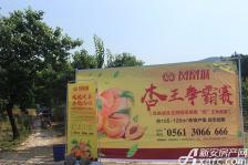 淮北凤凰城杏采摘活动20180603