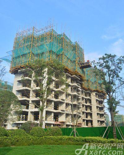 公园里2018年11月 小区施工楼栋