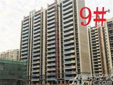 铜陵碧桂园9#楼项目进度(2019.1.27)