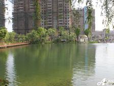恒大绿洲恒大绿洲小区湖景。(2012.4)
